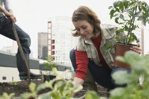 Woman planting roof garden